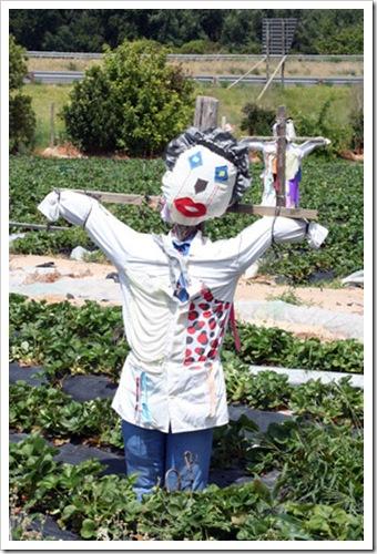 Polkadraai-Scarecrow