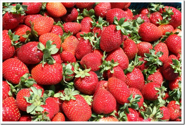 Strawberry Summer (c) Greg Pillhofer, 2009