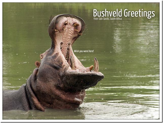 Bushveld Greetings 1 - Hippo (c) 2011, Greg Pillhofer & The BlaBla Blog