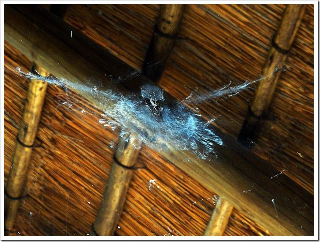 Bird Strike (c) Greg Pillhofer, 2012 [Click to Enlarge]